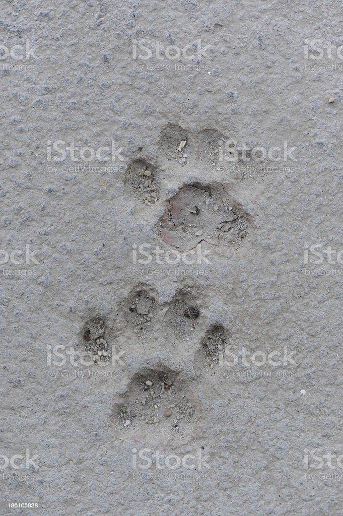 Cat Paw Prints in Concrete stock photo