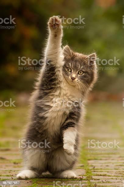 Cat paw puppy with cute picture id467927687?b=1&k=6&m=467927687&s=612x612&h=s2bxrk2yoem1fykcvwjgdxwgpogfecsokm0lb2ubix8=