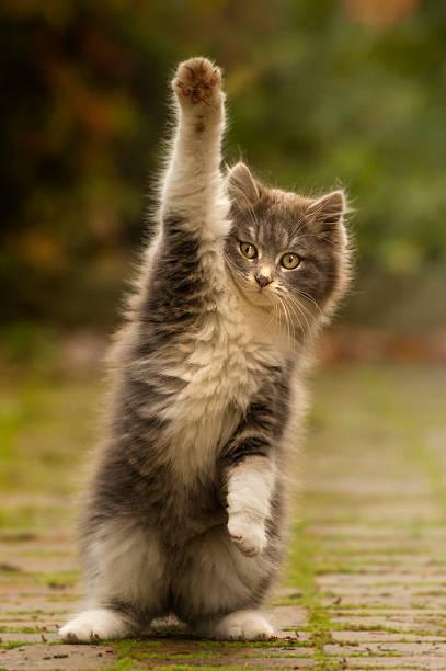 Cat paw puppy with cute picture id467927687?b=1&k=6&m=467927687&s=612x612&w=0&h=fk q0yosc2ahe8j9vz5ycnktii0yngsv2pmu2xpvusy=