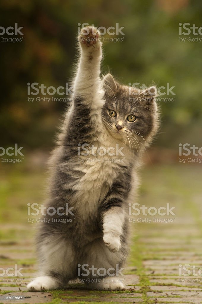 cat paw puppy with cute stock photo