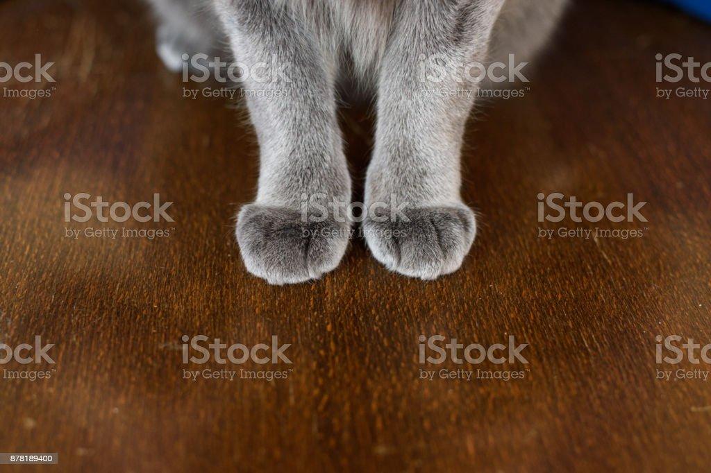 Katze Pfoten  – Foto
