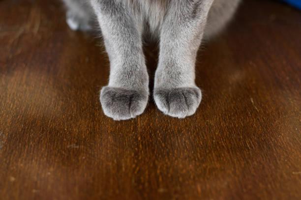 Cat paws stock photo