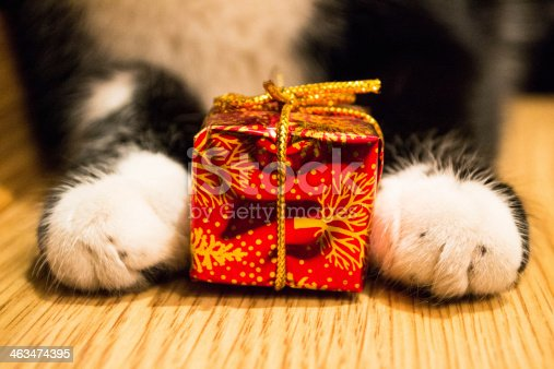 istock Cat paws with a red box 463474395