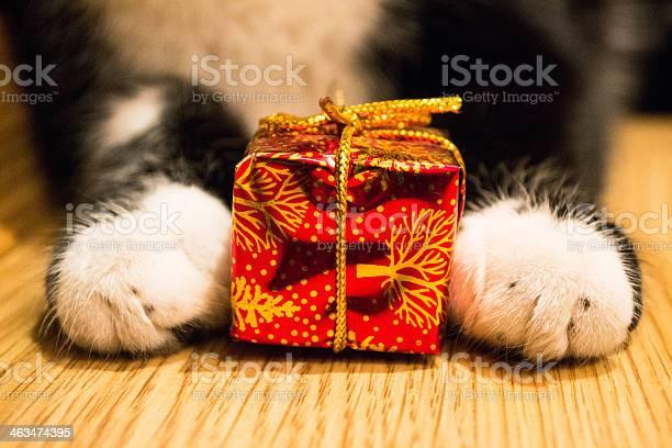 Cat paws with a red box picture id463474395?b=1&k=6&m=463474395&s=612x612&h=llabb ct0bqum2uombxs0ed jdndvyqolalms004ccu=