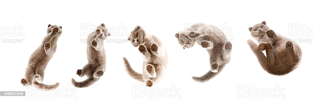 Cat paws with pink pillows. Shoot under glass stock photo