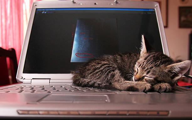 Cat peacefully sleeping on computer picture id188123174?b=1&k=6&m=188123174&s=612x612&w=0&h=fysydillpuhcbkiwkwkxhjvx4gnisssykawylzqijyc=