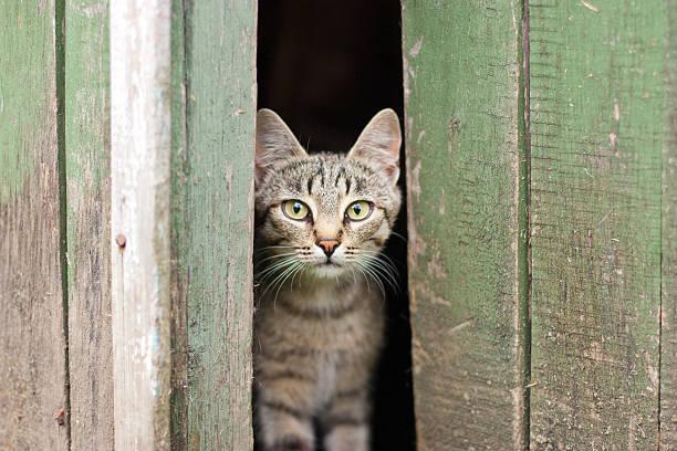cat peek out fright stock photo