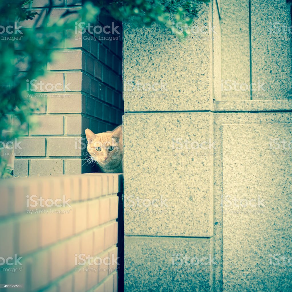 Cat peek through the gap of the building stock photo