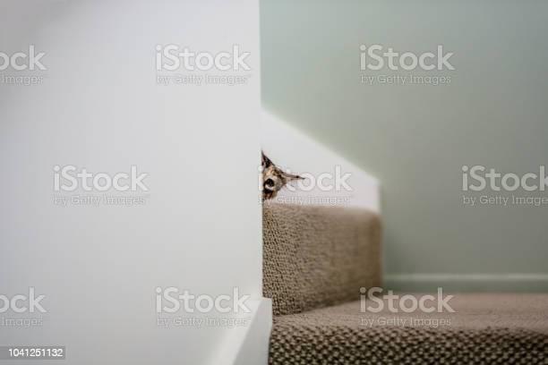 Cat peeking behind a wall picture id1041251132?b=1&k=6&m=1041251132&s=612x612&h=pyzypymxshnmvf i2cxefz9zjsz35g0qianycvwbgde=