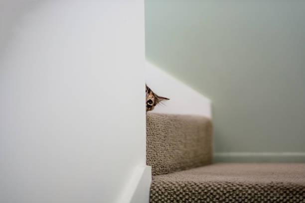 Cat peeking behind a wall picture id1041251132?b=1&k=6&m=1041251132&s=612x612&w=0&h=q3hmpzu wtzsy26qlbqtvkiajwx2w72yghkpprusvek=