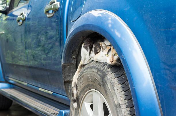 Cat peeping on wheel car picture id486848134?b=1&k=6&m=486848134&s=612x612&w=0&h=mvdxbmsy 61ml8j7xufgnwsxroc x6b4qvxfifu9a c=