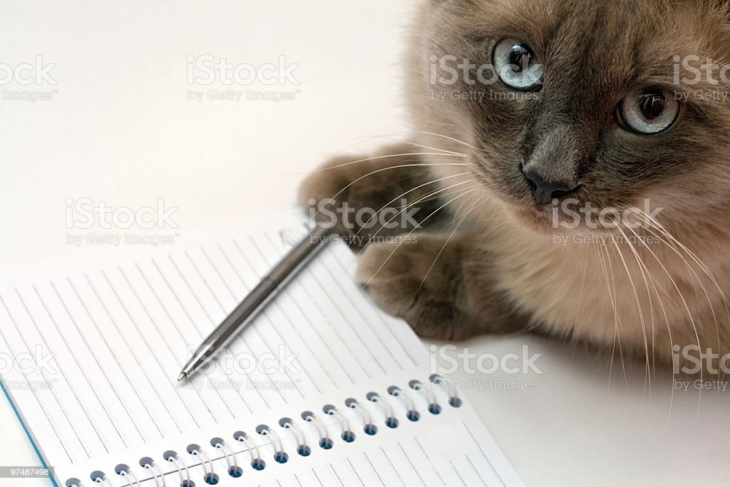 Cat, pen and blank open notepad royalty-free stock photo