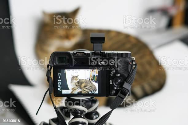 Cat photographed in studio picture id913405618?b=1&k=6&m=913405618&s=612x612&h=3pox0xs6kqv lum5t1wv6ylabinsuwazgi8av z2kqw=
