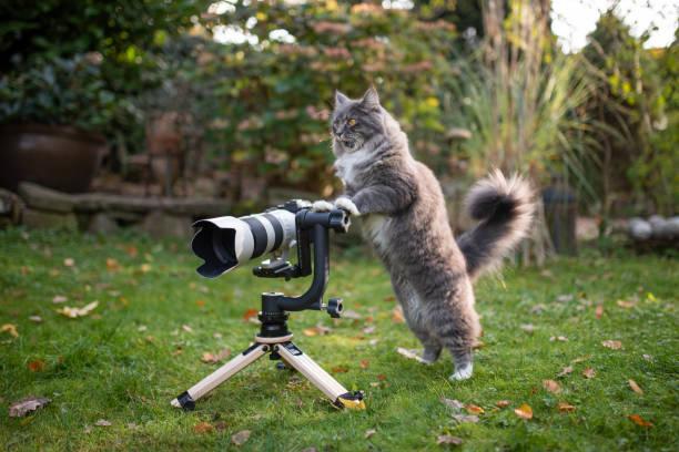 Cat photographer picture id1188693806?b=1&k=6&m=1188693806&s=612x612&w=0&h=k kktomalhictnng n9yjo8evvfovfzdpdq1xhwehqi=