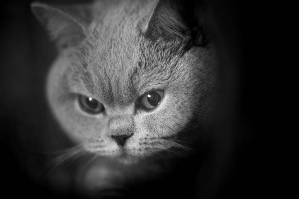 cat - animal eye stock pictures, royalty-free photos & images