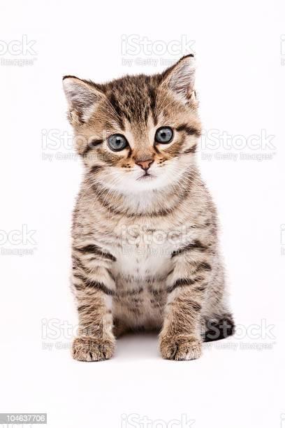 Cat picture id104637706?b=1&k=6&m=104637706&s=612x612&h=ujjcygziyg2ys52xvzpimq ejptpbhs4jb4hoolxgic=