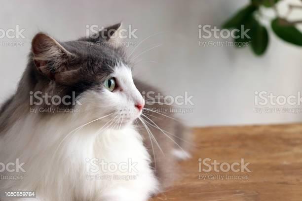 Cat picture id1050659764?b=1&k=6&m=1050659764&s=612x612&h=xeyez5klwezp7oziikpgk cj6gornqtegtsafouzi8s=