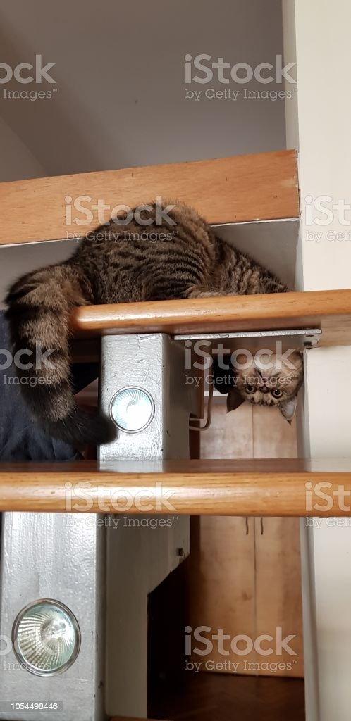 Cat стоковое фото