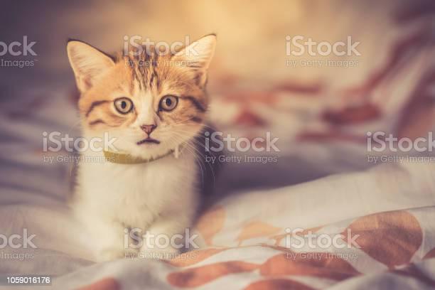 Cat picture id1059016176?b=1&k=6&m=1059016176&s=612x612&h=fh0mujvqatiueewda598sne 6fz3rqb2bjoo2dzt2j4=