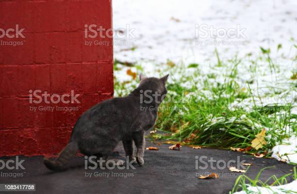 Cat picture id1083417758?b=1&k=6&m=1083417758&s=612x612&h=pqkfbo9xj a6y0bxwlsr3kymdrllv16cp2tfbmabeku=