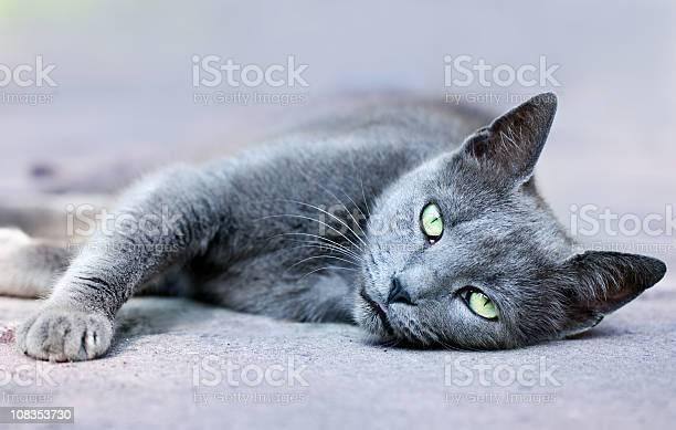 Cat picture id108353730?b=1&k=6&m=108353730&s=612x612&h=ad9gxt46k6sn826tjry9d9docibmh5b5vx3mzkfdmgg=