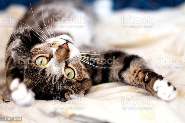 Cat picture id1126718353?b=1&k=6&m=1126718353&s=612x612&h=dmytrtmxgva2nx1bcwzdp9n4rezqajwzfz cysovfwa=