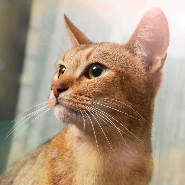 Cat picture id1135063172?b=1&k=6&m=1135063172&s=612x612&w=0&h=i9y0jiabuwfmymo7kzbevl n mooy2sfsmm5243ul5e=