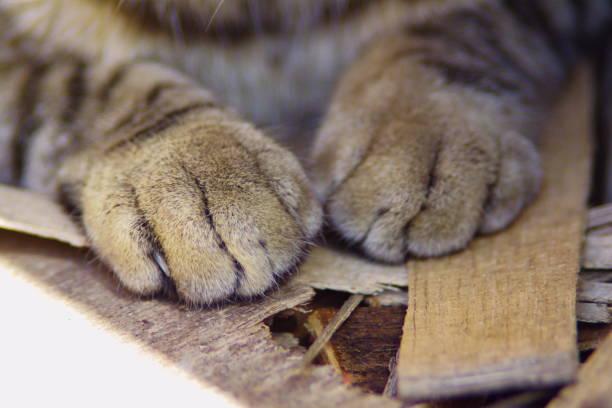die Katze – Foto