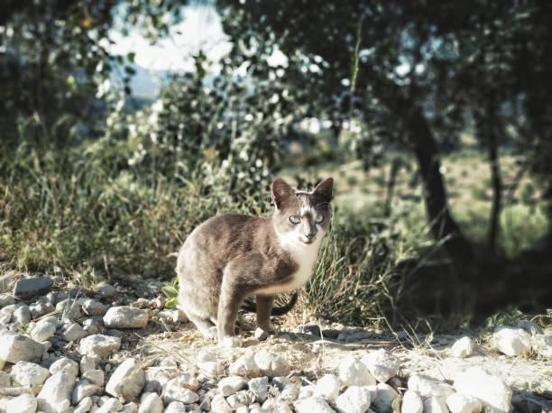 고양이 - 생태 보전 지역 뉴스 사진 이미지