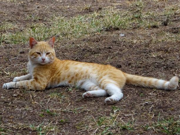Cat picture id1156095797?b=1&k=6&m=1156095797&s=612x612&w=0&h=mjjel8nxcbjxfb5c5eyfrvt9rda njhlkh922b2dwwe=