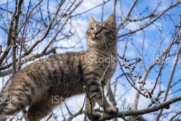 Cat picture id1197924679?b=1&k=6&m=1197924679&s=612x612&h=9nxp1fwtm7i9j0yeh1ffpskqvj vqsxyagpfmxz8cme=