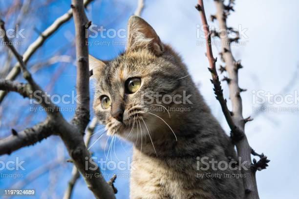 Cat picture id1197924689?b=1&k=6&m=1197924689&s=612x612&h=8absa 4vuy0appb4cps1l zywshczc9obeti zalxro=