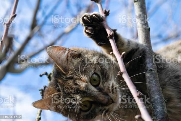 Cat picture id1197924712?b=1&k=6&m=1197924712&s=612x612&h=nudjubzbcnaubp44su jylc9gxat pxddkzxab3q8xi=