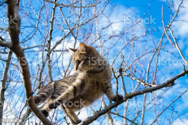 Cat picture id1197924728?b=1&k=6&m=1197924728&s=612x612&h=ekgc5rwfppnpjzg2biowfmzzb46f82jvciqkur9i0pa=