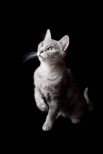 Cat picture id154964221?b=1&k=6&m=154964221&s=612x612&w=0&h=46wb xaetxk9p5qp7bzcg5n9pkikh2e5xvuzqaavvek=