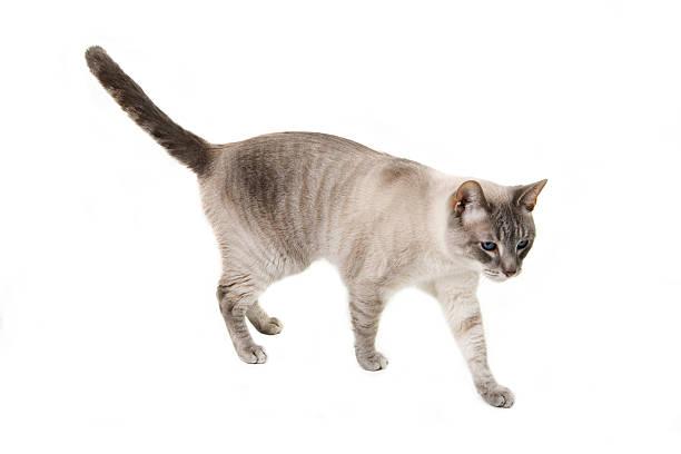 Cat picture id172171059?b=1&k=6&m=172171059&s=612x612&w=0&h=h0hgw clqp6az grivnixcoxn2u9pehmzkah64suzji=