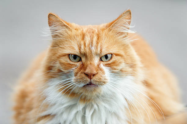 Cat picture id174943225?b=1&k=6&m=174943225&s=612x612&w=0&h=es5 arsrbjok4mtp0ppiir qmsp2bmxznpl 2wih2gq=