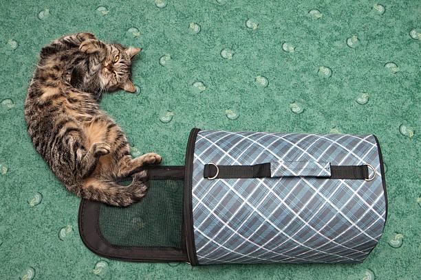 Cat picture id178373596?b=1&k=6&m=178373596&s=612x612&w=0&h=3sem5f4m3o8dvfqy4p0akzhf8uvt piir4xsipogcke=