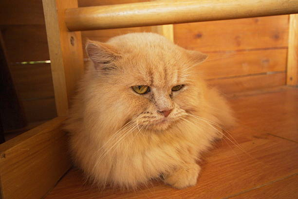 Cat picture id178556857?b=1&k=6&m=178556857&s=612x612&w=0&h=czzxzmu naxdftd07f1ex3tv5qgtsh kjdgouwau1aq=