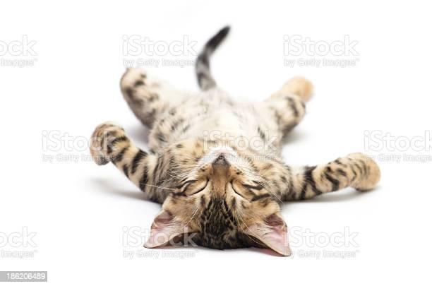 Cat picture id186206489?b=1&k=6&m=186206489&s=612x612&h=z2lmn0w 3movgiojhzyobmrkeg6kuhdgftrn4y mct0=