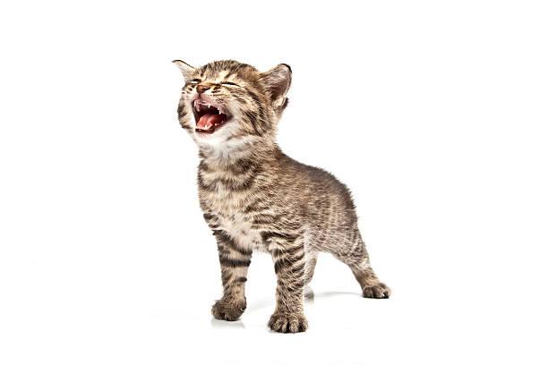 Cat picture id187550763?b=1&k=6&m=187550763&s=612x612&w=0&h=oncqyykmwa kinpqwq1h2be0q2siv3yjtbgrghq0r6a=
