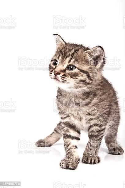 Cat picture id187550776?b=1&k=6&m=187550776&s=612x612&h=3nejdwcjlftqxtljkhyj2dejr4uf1z2ghlltzltw974=