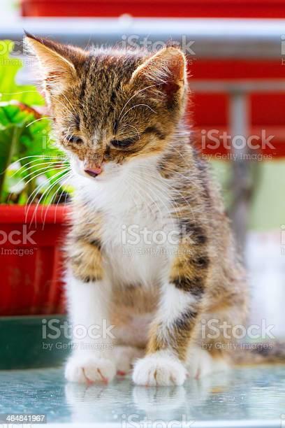 Cat picture id464841967?b=1&k=6&m=464841967&s=612x612&h=ih pjsayukc2xzmrubzu2fujjazrs bmuzbwyoyv6vu=