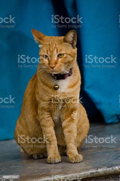 Cat picture id469573337?b=1&k=6&m=469573337&s=612x612&h=5rcnzel bzskugf9qgjxbyxl6eunte64sah3vdu1hfa=