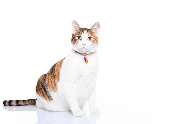 Cat picture id476033651?b=1&k=6&m=476033651&s=612x612&w=0&h=rplyo2nvqdkp8craef7uvwxrfdn5nold8vreelwwppg=