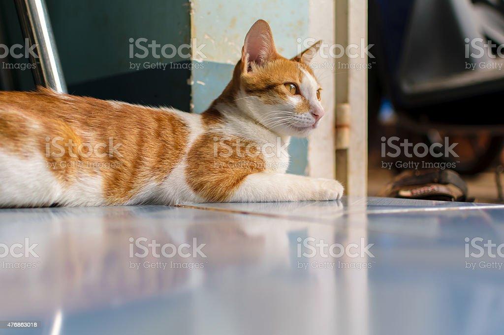 cat ストックフォト