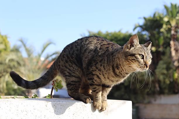 Cat picture id481776754?b=1&k=6&m=481776754&s=612x612&w=0&h=gjysrj5pab9xupcibkisiu6dep5hd5nvdmgshfahqok=