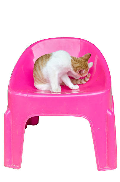 cat - rot bekümmerte möbel stock-fotos und bilder