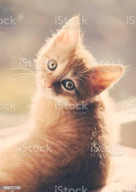 Cat picture id499572706?b=1&k=6&m=499572706&s=612x612&h=dgeilvnu8l72zaylgsclnkc7e0au k1syg8 zm4tges=