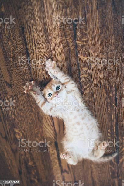 Cat picture id499572886?b=1&k=6&m=499572886&s=612x612&h=ib7vc2qskdjzcevongefyslu dqybhyig9wql4gkwrs=